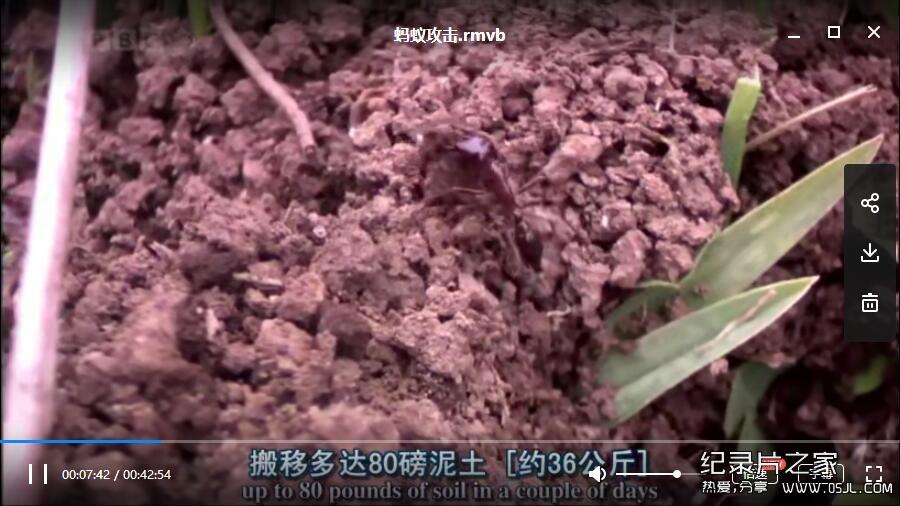 [英语中英字幕]动物世界纪录片:bbc-自然世界:蚂蚁攻击 Natural World: Ant Attack (2006)全1集 高清下载图片 No.2