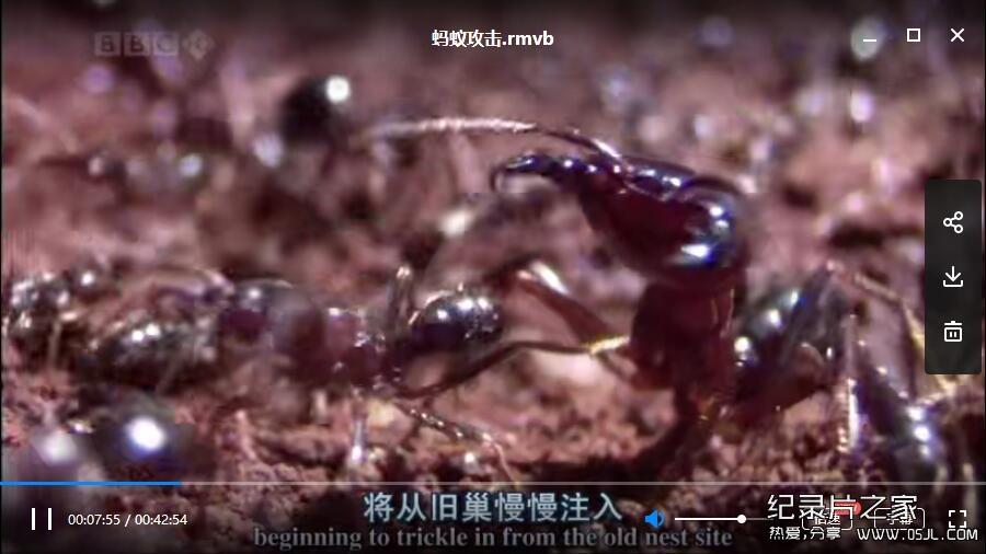 [英语中英字幕]动物世界纪录片:bbc-自然世界:蚂蚁攻击 Natural World: Ant Attack (2006)全1集 高清下载图片 No.3