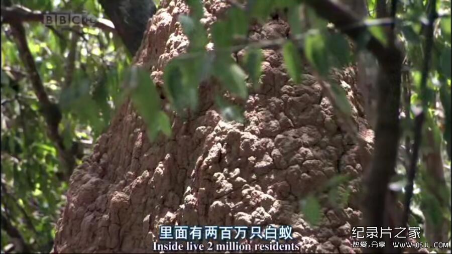 [英语中英字幕]动物世界纪录片:bbc-自然世界:蚂蚁攻击 Natural World: Ant Attack (2006)全1集 高清下载图片 No.4