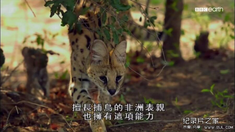 [英语中字]动物世界纪录片:bbc-猫科动物的故事 The Story of Cats (2016)全3集 高清720P下载图片 No.2
