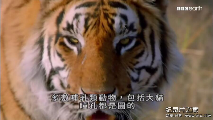 [英语中字]动物世界纪录片:bbc-猫科动物的故事 The Story of Cats (2016)全3集 高清720P下载图片 No.3