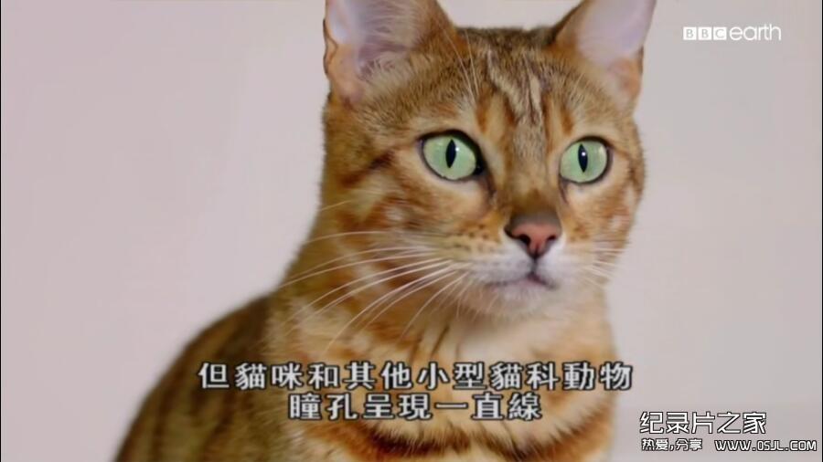[英语中字]动物世界纪录片:bbc-猫科动物的故事 The Story of Cats (2016)全3集 高清720P下载图片 No.4