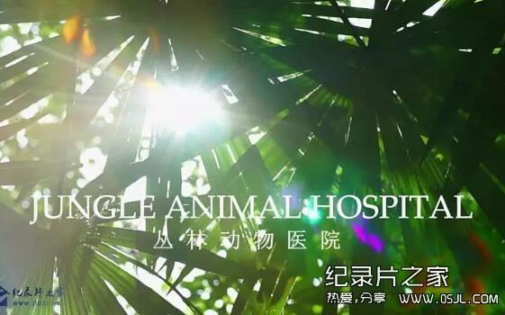 [英语中英字幕] BBC自然世界:丛林动物医院Jungle Animal Hospital 2016 全1集 高清720P下载图片 No.1