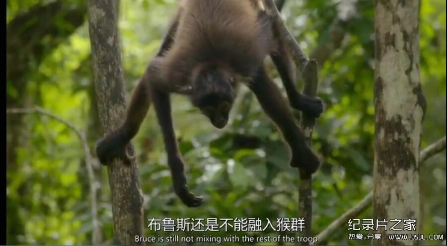 [英语中英字幕] BBC自然世界:丛林动物医院Jungle Animal Hospital 2016 全1集 高清720P下载图片 No.2