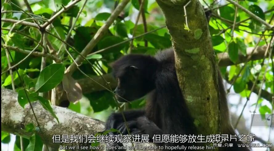 [英语中英字幕] BBC自然世界:丛林动物医院Jungle Animal Hospital 2016 全1集 高清720P下载图片 No.3