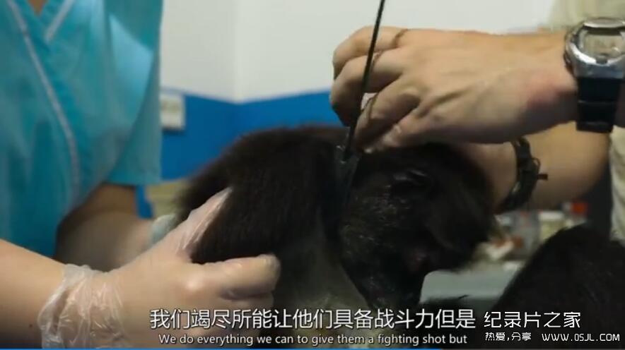 [英语中英字幕] BBC自然世界:丛林动物医院Jungle Animal Hospital 2016 全1集 高清720P下载图片 No.4