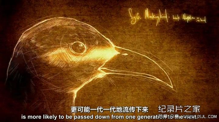 [英语中英双语字幕]BBC纪录片: 达尔文的秘密笔记 Darwin's Secret Notebooks  全1集下载图片 No.4