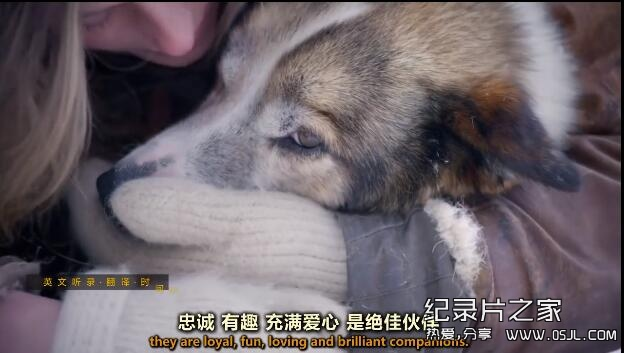[英语中英字幕]狗狗秘闻(汪星人的秘密生活)Secret Life of Dogs 第一集图片 No.1