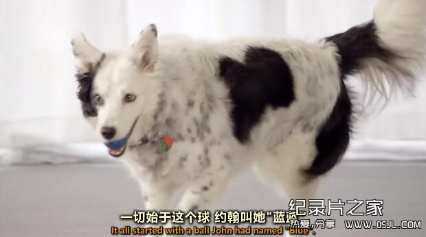 [英语中英字幕]狗狗秘闻(汪星人的秘密生活)Secret Life of Dogs 第一集图片 No.2