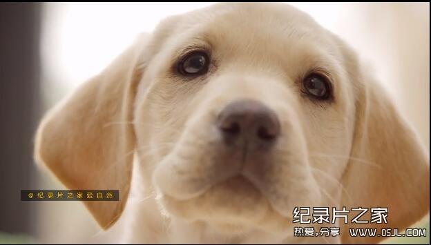 [英语中英字幕]bbc:狗狗秘闻(汪星人的秘密生活)Secret Life of Dogs 第二集图片 No.1