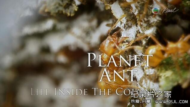 【英语中字】动物世界纪录处:BBC-蚂蚁国度 Planet Ant 全1集高清图片 No.1