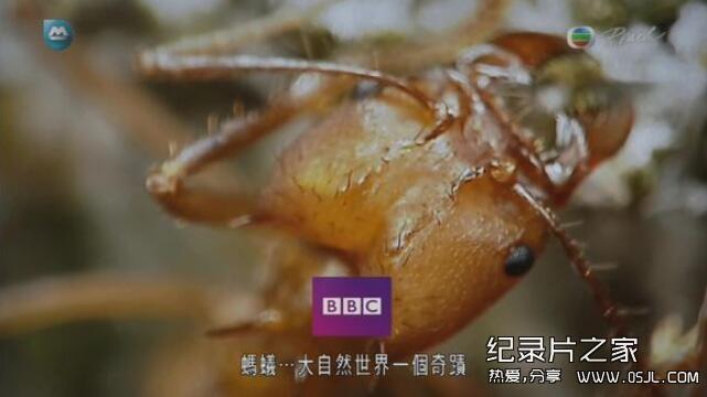【英语中字】动物世界纪录处:BBC-蚂蚁国度 Planet Ant 全1集高清图片 No.2