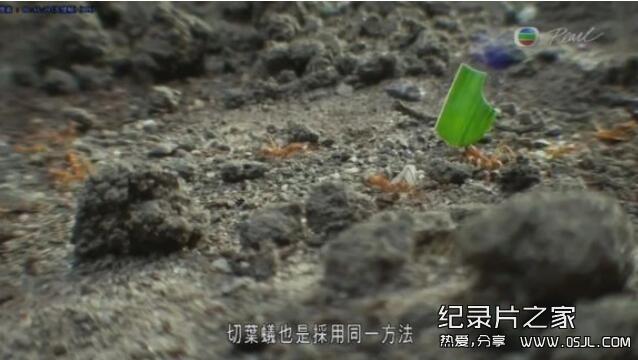 【英语中字】动物世界纪录处:BBC-蚂蚁国度 Planet Ant 全1集高清图片 No.4