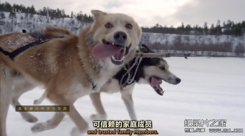 [英语中英字幕]bbc:狗狗秘闻(汪星人的秘密生活)Secret Life of Dogs 第三集 高清图片 No.1