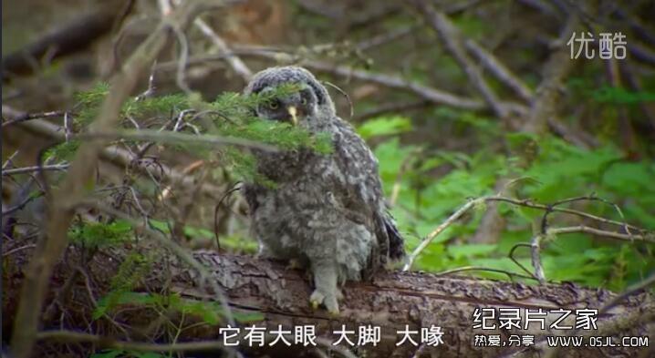 [英语中字]动物世界纪录片:BBC自然界的恶魔 Nightmares Of Nature 第一季全10集图片 No.1