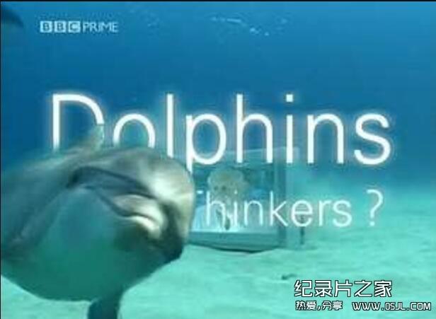 [英语中字]动物世界纪片:BBC聪明的海豚(海豚智力之谜) Dolphins-Deep Thinkers 全1集图片