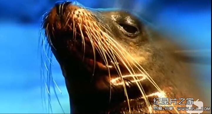 [英语中字]bbc纪录片:野性南美洲 Wild South America (2000) 全6集图片 No.2