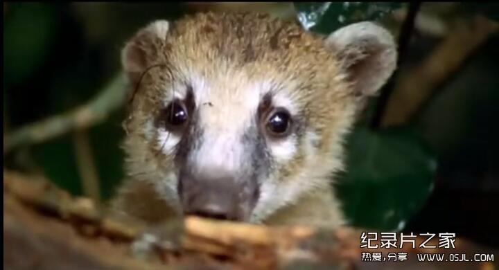 [英语中字]bbc纪录片:野性南美洲 Wild South America (2000) 全6集图片 No.3