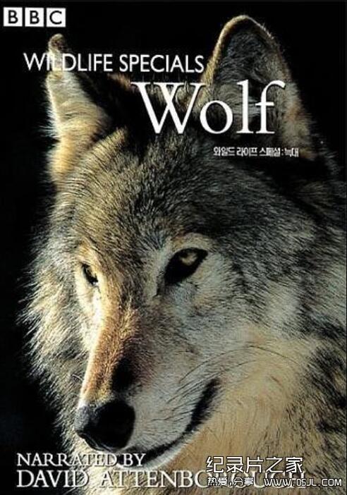 [英语中字]动物世界纪录片:BBC-野生生物特辑 Wildlife Specials 全11辑图片 No.3