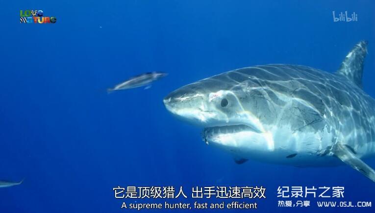 [英语中英字幕]动物世界纪录片:鲨鱼小队 Shark Squad 全4集 高清图片 No.1