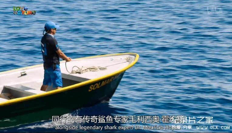 [英语中英字幕]动物世界纪录片:鲨鱼小队 Shark Squad 全4集 高清图片 No.2