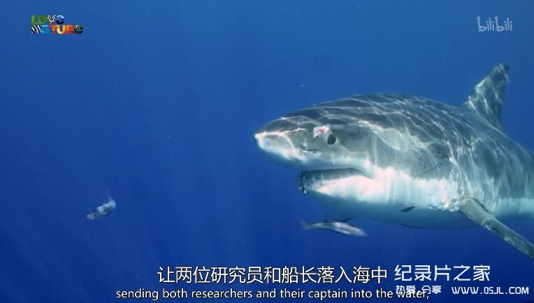 [英语中英字幕]动物世界纪录片:鲨鱼小队 Shark Squad 全4集 高清图片 No.3