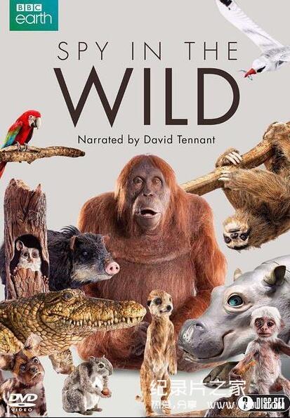 [英语中英字幕]BBC动物世界纪录片:荒野间谍 第一季 Spy in the Wild 全5集图片 No.1
