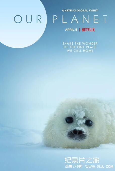 [英语中字]Netflix出品纪录片:我们的星球 Our Planet (2019) 全8集 1080P图片